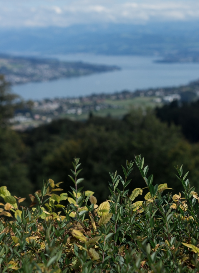 View from Uetliberg