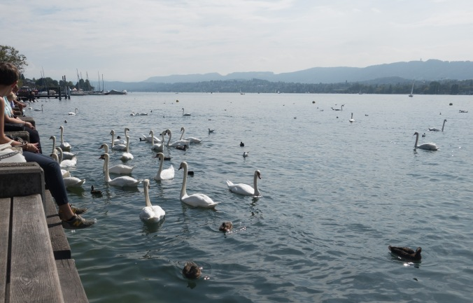 Swans in Lake Zürich
