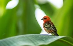 Love this little birdie